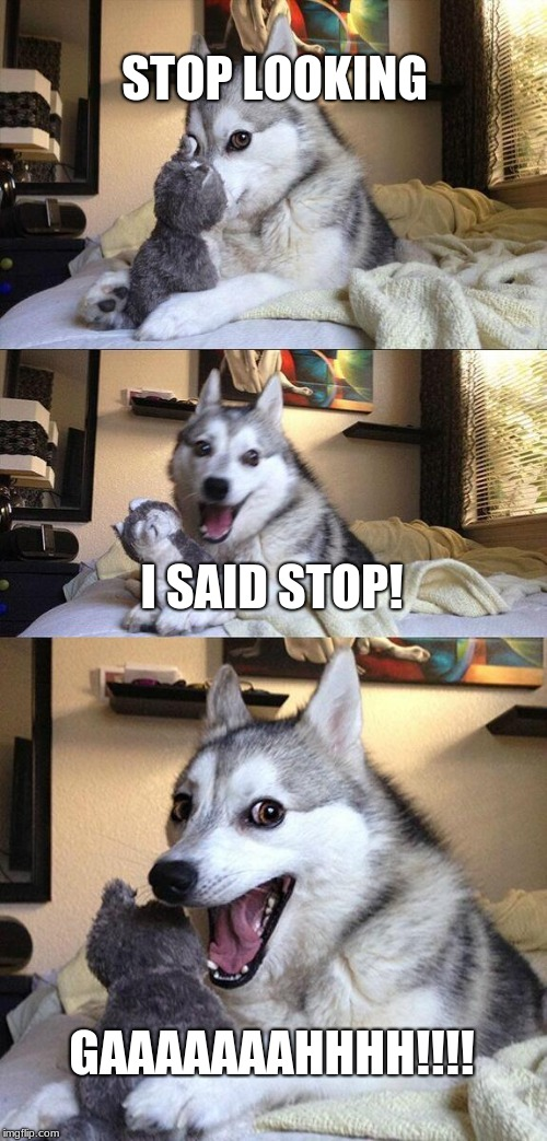 Bad Pun Dog | STOP LOOKING I SAID STOP! GAAAAAAAHHHH!!!! | image tagged in memes,bad pun dog,fluffy | made w/ Imgflip meme maker