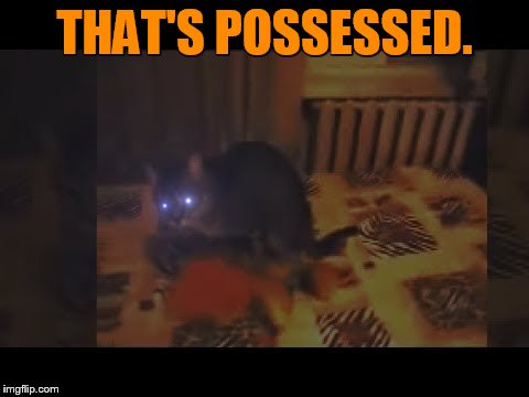 Is Anyone Looking For A Cat | THAT'S POSSESSED. | image tagged in memes,someone,looking,possessed,cat,halloween | made w/ Imgflip meme maker