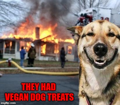 I don't know...is that even a thing? | THEY HAD VEGAN DOG TREATS | image tagged in disaster dog,memes,disaster girl,funny,vegan,burnin' down the house | made w/ Imgflip meme maker