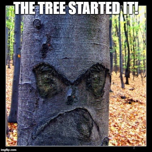 THE TREE STARTED IT! | made w/ Imgflip meme maker
