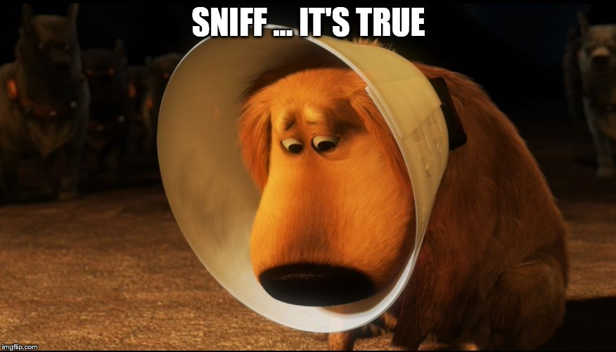Doug from Up - Cone of Shame | SNIFF … IT'S TRUE | image tagged in doug from up - cone of shame | made w/ Imgflip meme maker