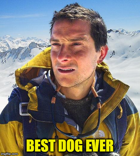 Bear Grylls Meme | BEST DOG EVER | image tagged in memes,bear grylls | made w/ Imgflip meme maker