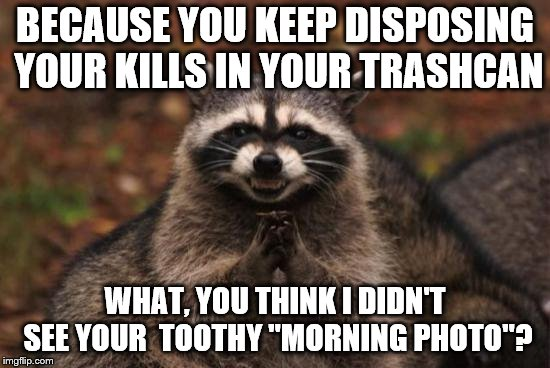 "Scheming Racoon | BECAUSE YOU KEEP DISPOSING YOUR KILLS IN YOUR TRASHCAN WHAT, YOU THINK I DIDN'T SEE YOUR  TOOTHY ""MORNING PHOTO""? 