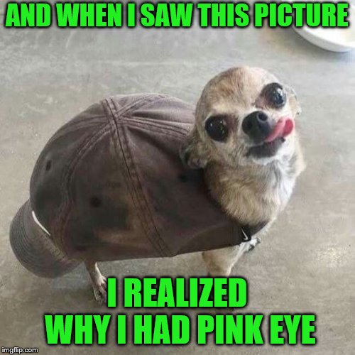 And he looks happy about scratching his butt on the hat | AND WHEN I SAW THIS PICTURE I REALIZED WHY I HAD PINK EYE | image tagged in memes,pink eye,dogs,dog wearing hat | made w/ Imgflip meme maker