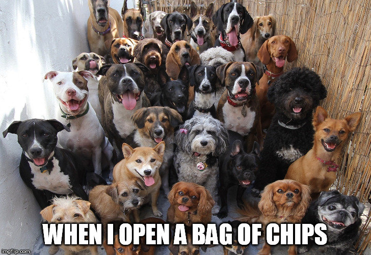 Only crumbs left... | WHEN I OPEN A BAG OF CHIPS | image tagged in chips,funny dogs,funny animals,when you,meme | made w/ Imgflip meme maker