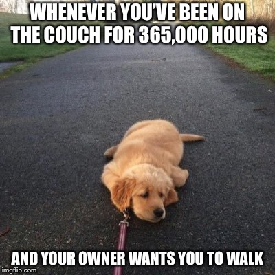 Doggo getting dragged | WHENEVER YOU'VE BEEN ON THE COUCH FOR 365,000 HOURS AND YOUR OWNER WANTS YOU TO WALK | image tagged in doggo | made w/ Imgflip meme maker