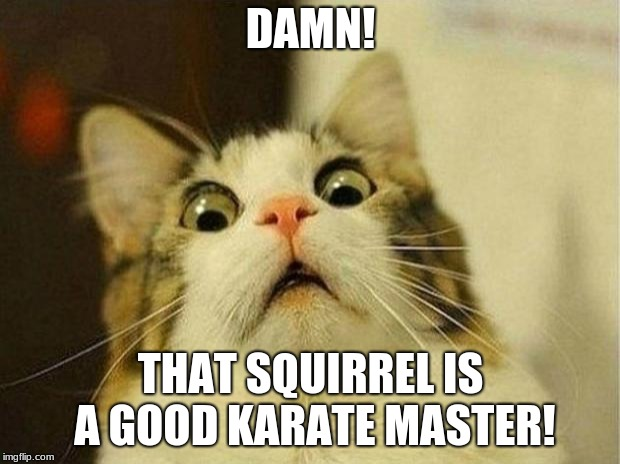 Scared Cat Meme | DAMN! THAT SQUIRREL IS A GOOD KARATE MASTER! | image tagged in memes,scared cat | made w/ Imgflip meme maker