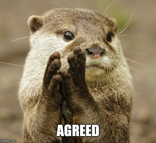 Squirrel Applause | AGREED | image tagged in squirrel applause | made w/ Imgflip meme maker