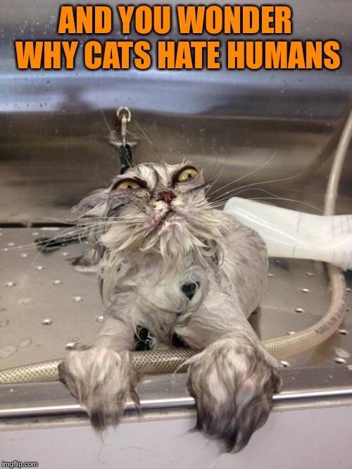 Angry Wet Cat | AND YOU WONDER WHY CATS HATE HUMANS | image tagged in angry wet cat | made w/ Imgflip meme maker