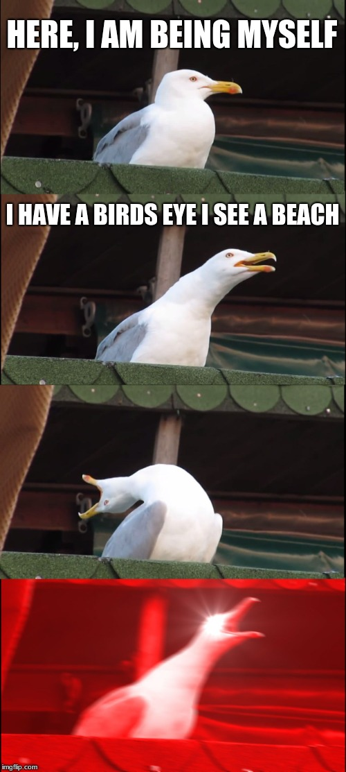 Inhaling Seagull Meme | HERE, I AM BEING MYSELF I HAVE A BIRDS EYE I SEE A BEACH | image tagged in memes,inhaling seagull | made w/ Imgflip meme maker