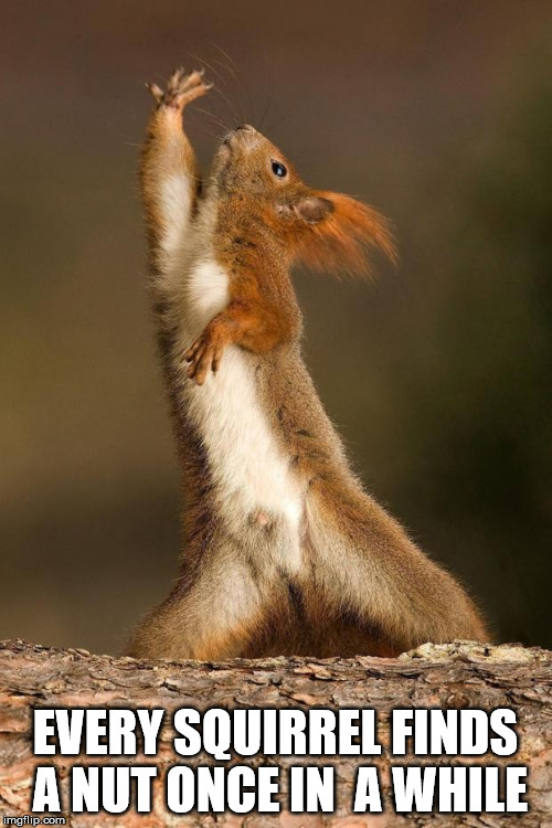 Dancing Squirrel | EVERY SQUIRREL FINDS A NUT ONCE IN  A WHILE | image tagged in dancing squirrel | made w/ Imgflip meme maker