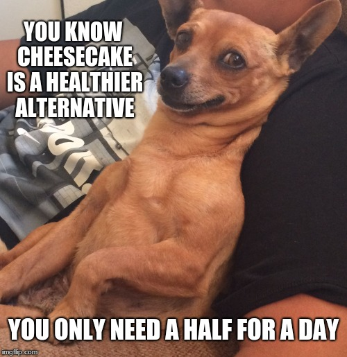 Max the Sarcastic Dog | YOU KNOW CHEESECAKE IS A HEALTHIER ALTERNATIVE YOU ONLY NEED A HALF FOR A DAY | image tagged in max the sarcastic dog | made w/ Imgflip meme maker