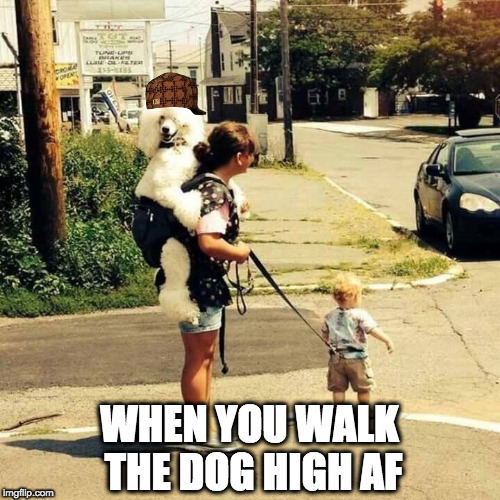 WHEN YOU WALK THE DOG HIGH AF | image tagged in leash child dog backstrap | made w/ Imgflip meme maker