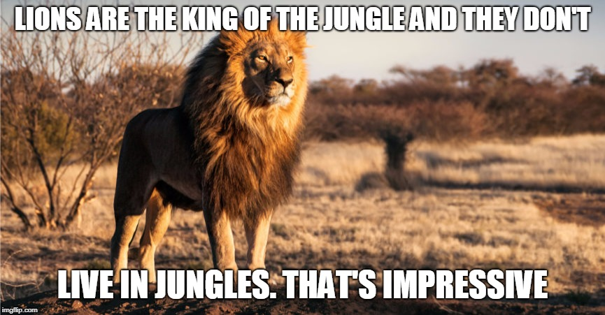 how do they, do it | LIONS ARE THE KING OF THE JUNGLE AND THEY DON'T LIVE IN JUNGLES. THAT'S IMPRESSIVE | image tagged in lion,jungle | made w/ Imgflip meme maker