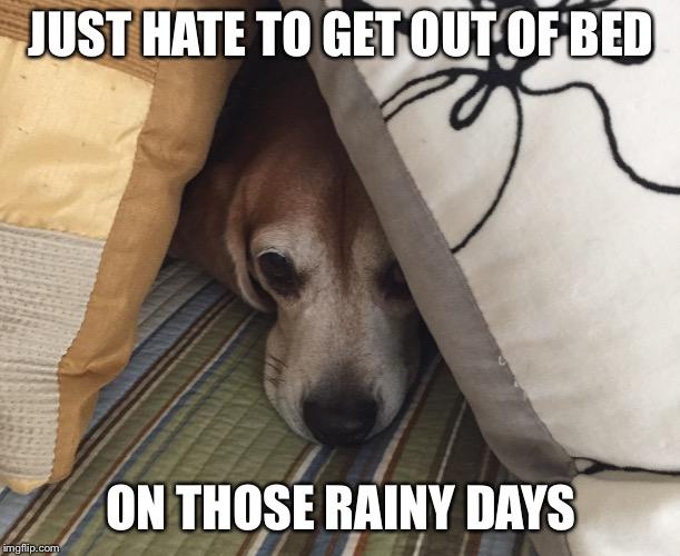 Rainy Day Beagle Imgflip