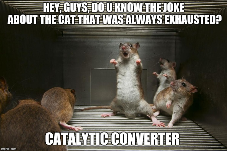 Humor is the Weapon of the Weak |  HEY, GUYS, DO U KNOW THE JOKE ABOUT THE CAT THAT WAS ALWAYS EXHAUSTED? CATALYTIC CONVERTER | image tagged in mice,cats,class struggle | made w/ Imgflip meme maker