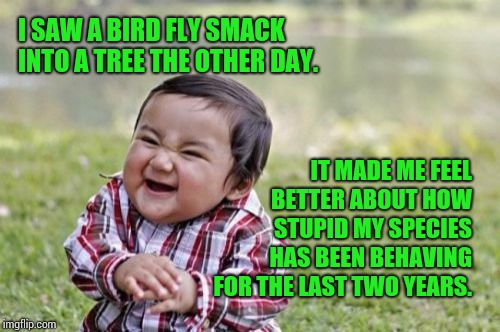 Birds Don't Just Fly They Fall Down And Get Up. | I SAW A BIRD FLY SMACK INTO A TREE THE OTHER DAY. IT MADE ME FEEL BETTER ABOUT HOW STUPID MY SPECIES HAS BEEN BEHAVING FOR THE LAST TWO YEAR | image tagged in memes,evil toddler,meme,funny but true,true story,shit happens | made w/ Imgflip meme maker