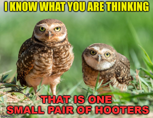 I am not fond of small hooters | I KNOW WHAT YOU ARE THINKING THAT IS ONE SMALL PAIR OF HOOTERS | image tagged in memes,hooters,small,owls,play on words,funny | made w/ Imgflip meme maker