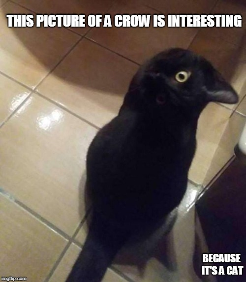 CRAT? |  THIS PICTURE OF A CROW IS INTERESTING; BECAUSE IT'S A CAT | image tagged in crow | made w/ Imgflip meme maker