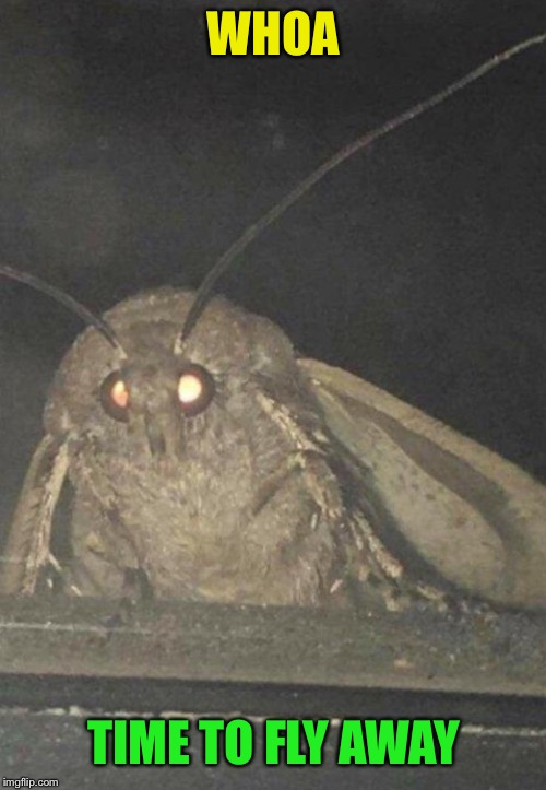 Moth | WHOA TIME TO FLY AWAY | image tagged in moth | made w/ Imgflip meme maker