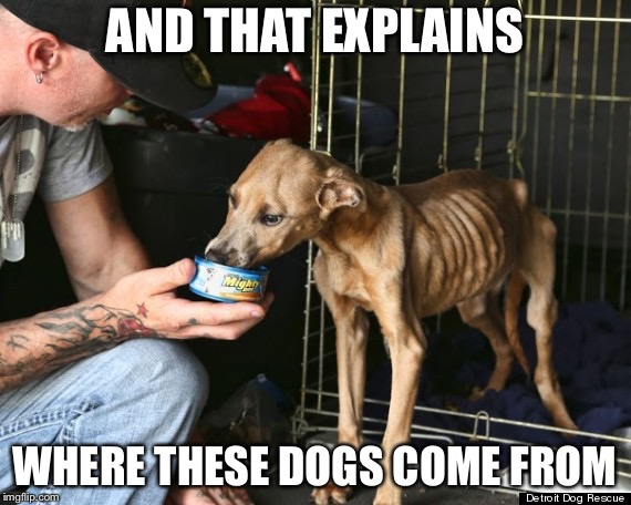 AND THAT EXPLAINS WHERE THESE DOGS COME FROM | made w/ Imgflip meme maker