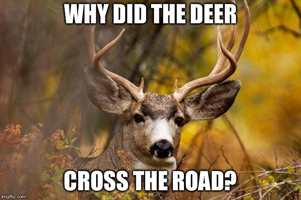 deer meme | WHY DID THE DEER CROSS THE ROAD? | image tagged in deer meme | made w/ Imgflip meme maker