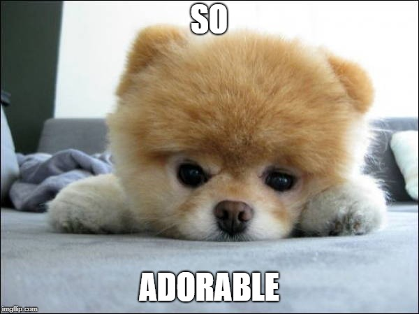 Adorable | SO ADORABLE | image tagged in adorable | made w/ Imgflip meme maker