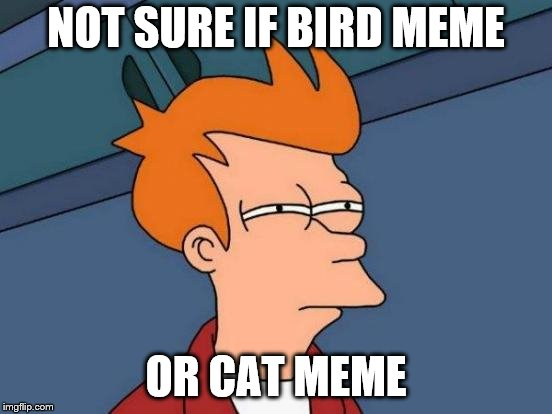 Futurama Fry Meme | NOT SURE IF BIRD MEME OR CAT MEME | image tagged in memes,futurama fry | made w/ Imgflip meme maker