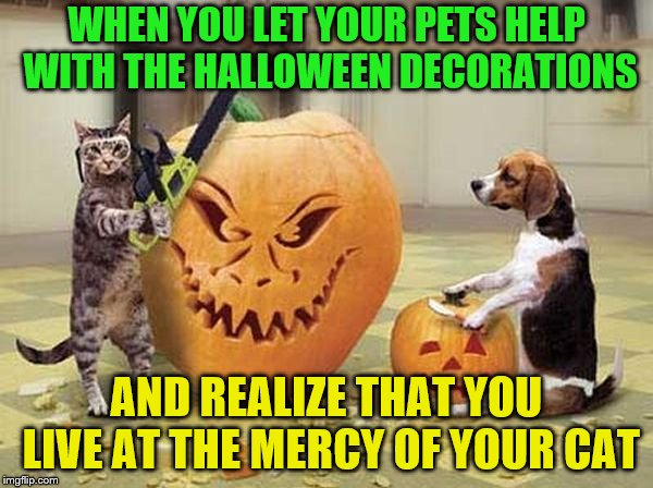 That dog should be scared | WHEN YOU LET YOUR PETS HELP WITH THE HALLOWEEN DECORATIONS AND REALIZE THAT YOU LIVE AT THE MERCY OF YOUR CAT | image tagged in memes,pumpkin carving,pets,cats,halloween,chainsaw | made w/ Imgflip meme maker