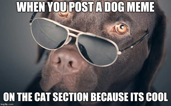 Cool dogs |  WHEN YOU POST A DOG MEME; ON THE CAT SECTION BECAUSE ITS COOL | image tagged in cool | made w/ Imgflip meme maker