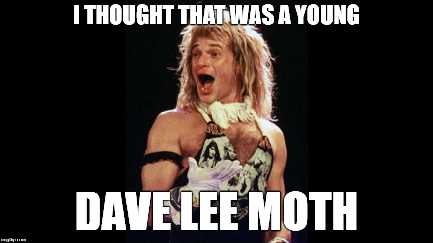 I THOUGHT THAT WAS A YOUNG DAVE LEE MOTH | made w/ Imgflip meme maker