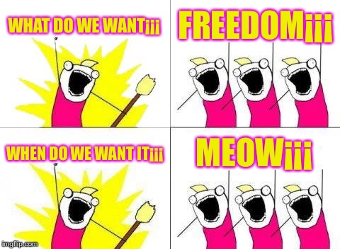 Lol | WHAT DO WE WANT¡¡¡ FREEDOM¡¡¡ WHEN DO WE WANT IT¡¡¡ MEOW¡¡¡ | image tagged in memes,what do we want | made w/ Imgflip meme maker