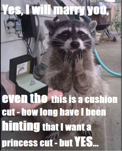 Yes, I will marry you even tho this is a cushion cut - how long have I been hinting that I want a princess cut - but yes | image tagged in himym,funny raccoon,krirsten,funny,humor,wedding ring | made w/ Imgflip meme maker