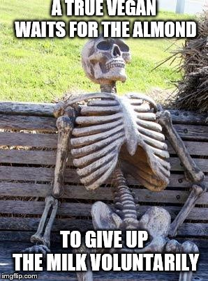 Waiting Skeleton Meme | A TRUE VEGAN WAITS FOR THE ALMOND TO GIVE UP THE MILK VOLUNTARILY | image tagged in memes,waiting skeleton | made w/ Imgflip meme maker