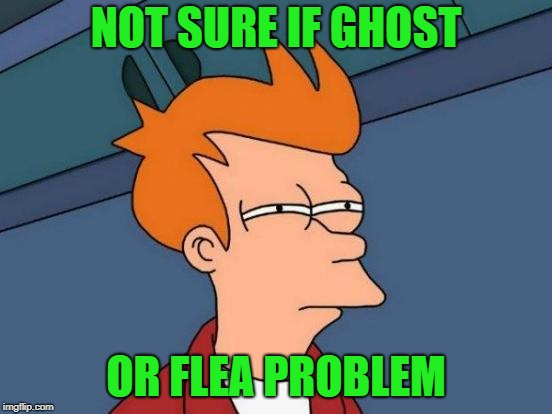 Futurama Fry Meme | NOT SURE IF GHOST OR FLEA PROBLEM | image tagged in memes,futurama fry | made w/ Imgflip meme maker