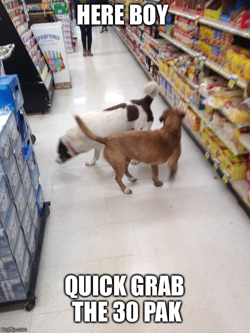 HERE BOY QUICK GRAB THE 30 PAK | image tagged in shopping dogs | made w/ Imgflip meme maker