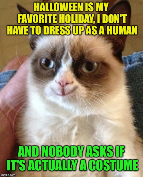 Happy grumpy cat | HALLOWEEN IS MY FAVORITE HOLIDAY, I DON'T HAVE TO DRESS UP AS A HUMAN AND NOBODY ASKS IF IT'S ACTUALLY A COSTUME | image tagged in happy grumpy cat | made w/ Imgflip meme maker