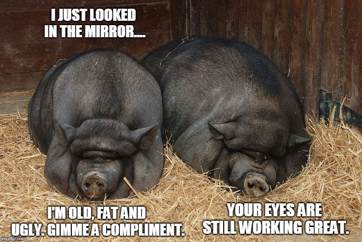 Barnyard Banter | I JUST LOOKED IN THE MIRROR.... I'M OLD, FAT AND UGLY. GIMME A COMPLIMENT. YOUR EYES ARE STILL WORKING GREAT. | image tagged in pigs,barn,banter | made w/ Imgflip meme maker