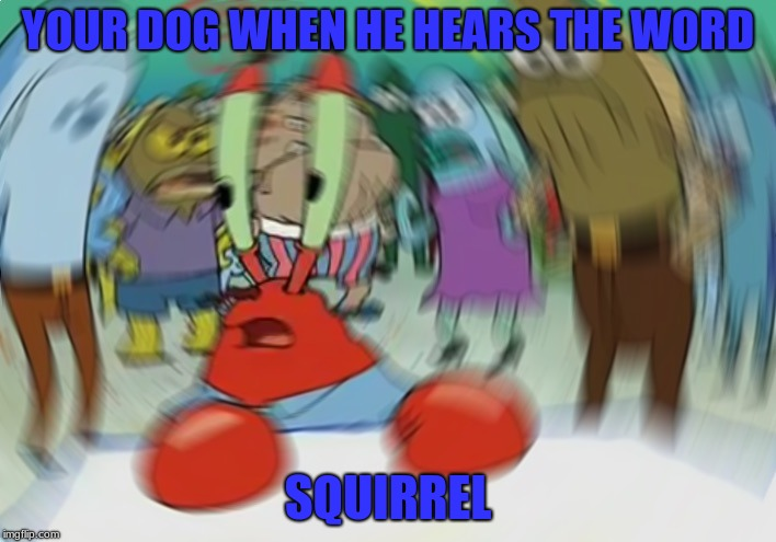 Mr Krabs Blur Meme Meme | YOUR DOG WHEN HE HEARS THE WORD SQUIRREL | image tagged in memes,mr krabs blur meme,dog,squirrel,funny,dankmemes | made w/ Imgflip meme maker