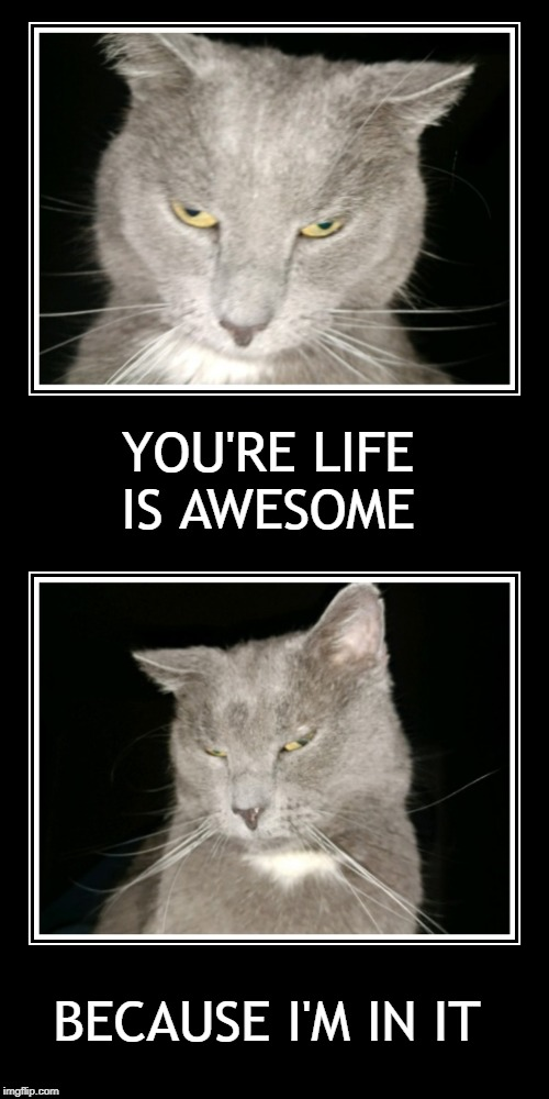 Motivational Message | YOU'RE LIFE IS AWESOME BECAUSE I'M IN IT | image tagged in motivational,cat,cat meme,the most interesting cat in the world,i love you,friends | made w/ Imgflip meme maker