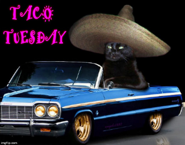 image tagged in taco tuesday,taco cat,cat,tuesday,car,cute cats | made w/ Imgflip meme maker
