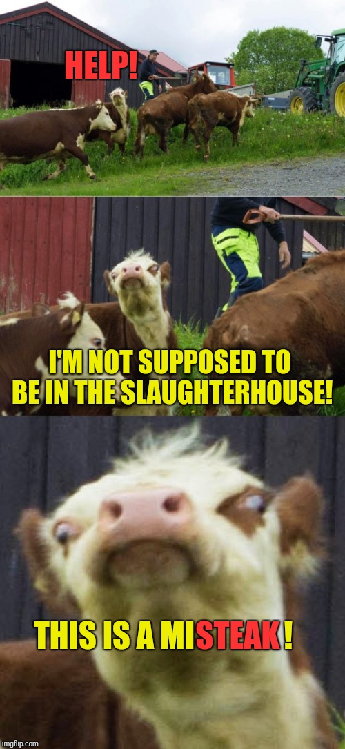 Bad pun cow  | HELP! I'M NOT SUPPOSED TO BE IN THE SLAUGHTERHOUSE! THIS IS A MI STEAK ! | image tagged in bad pun cow | made w/ Imgflip meme maker