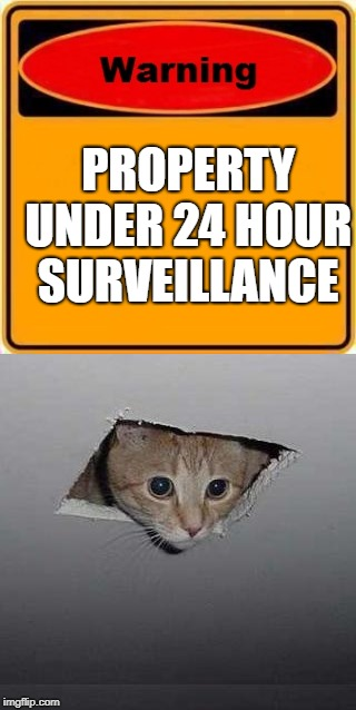 Security cat | PROPERTY UNDER 24 HOUR SURVEILLANCE | image tagged in cat,warning sign,security | made w/ Imgflip meme maker