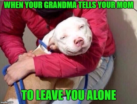 a grandma's love  | WHEN YOUR GRANDMA TELLS YOUR MOM TO LEAVE YOU ALONE | image tagged in grandma,dog,funny | made w/ Imgflip meme maker