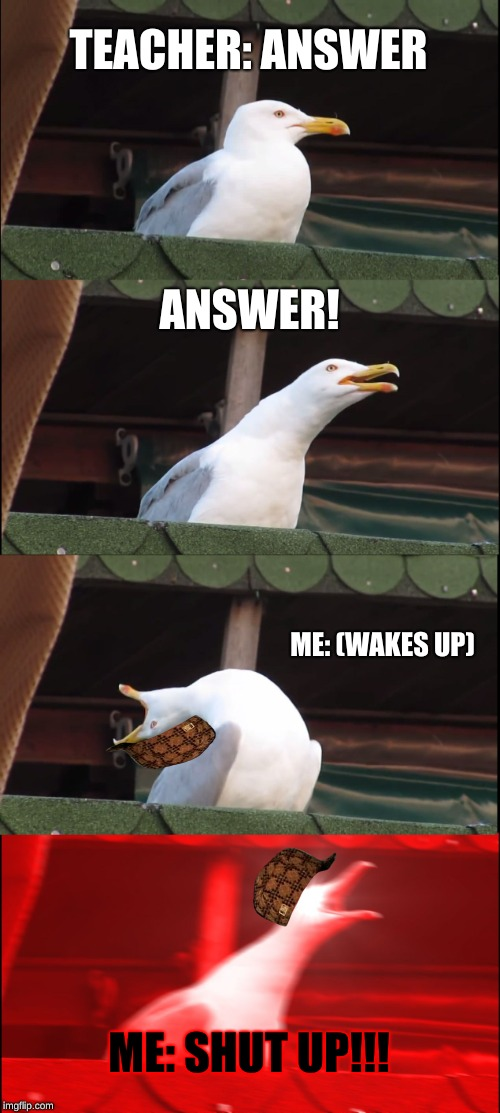 Inhaling Seagull Meme | TEACHER: ANSWER ANSWER! ME: (WAKES UP) ME: SHUT UP!!! | image tagged in memes,inhaling seagull,scumbag | made w/ Imgflip meme maker