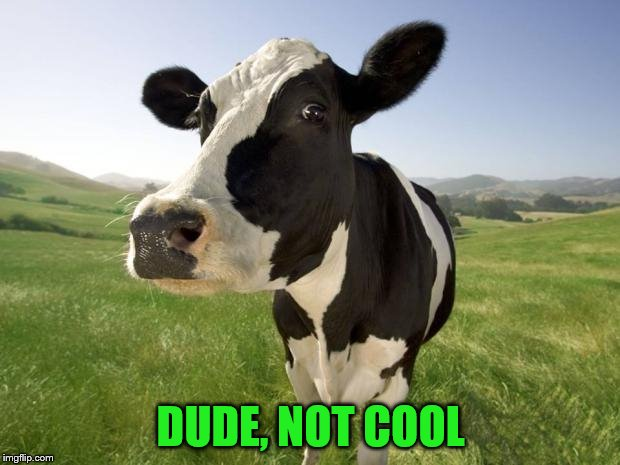cow | DUDE, NOT COOL | image tagged in cow | made w/ Imgflip meme maker