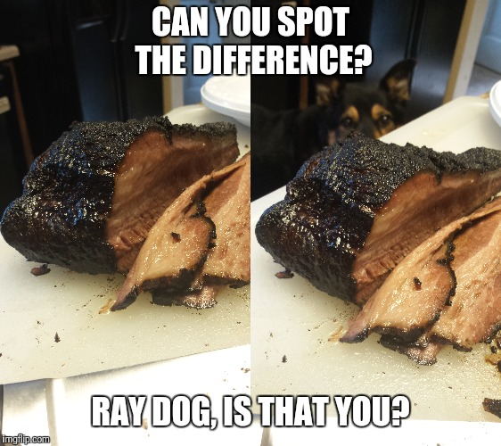 Homemade brisket will attract some critters!  | CAN YOU SPOT THE DIFFERENCE? RAY DOG, IS THAT YOU? | image tagged in bbq,raydog,match,hungry,delicious,smoke | made w/ Imgflip meme maker