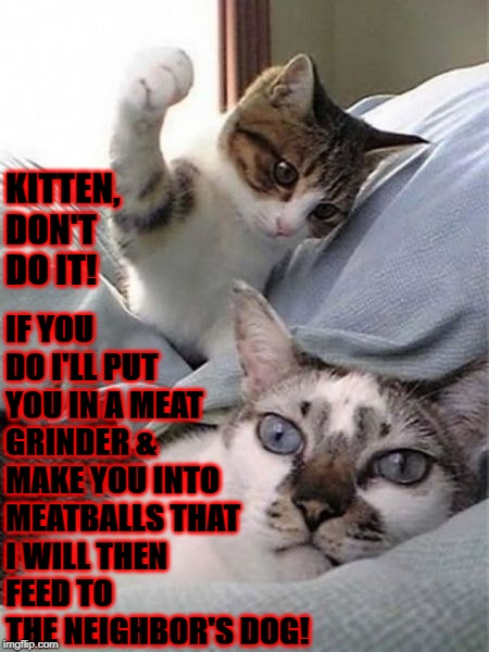 BAD IDEA | KITTEN, DON'T DO IT! IF YOU DO I'LL PUT YOU IN A MEAT GRINDER & MAKE YOU INTO MEATBALLS THAT I WILL THEN FEED TO THE NEIGHBOR'S DOG! | image tagged in bad idea | made w/ Imgflip meme maker