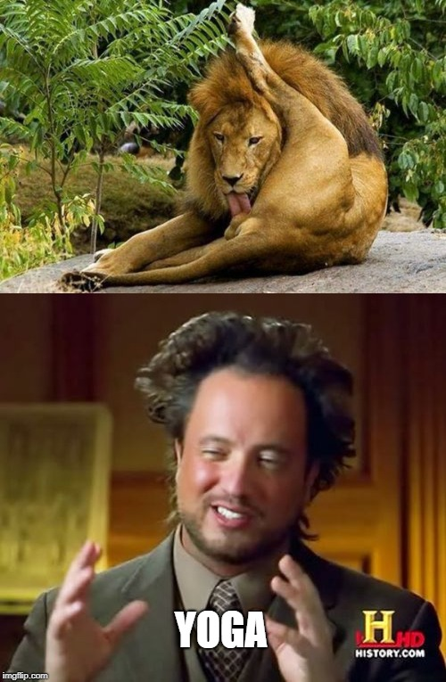 ancient techniques | YOGA | image tagged in nsfw,ancient aliens,lion,balls licking | made w/ Imgflip meme maker