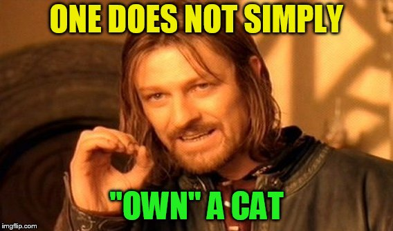 One Does Not Simply Meme | ONE DOES NOT SIMPLY ''OWN'' A CAT | image tagged in memes,one does not simply | made w/ Imgflip meme maker